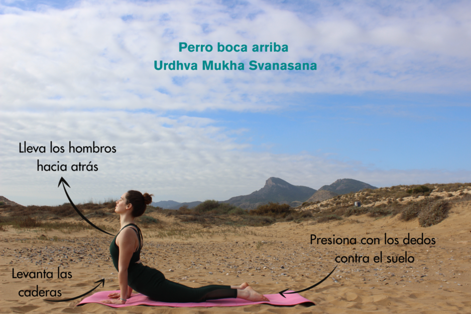 Postura perro boca arriba o urdha mukha svanasana