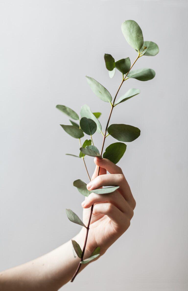 vida minimalista mindfulness